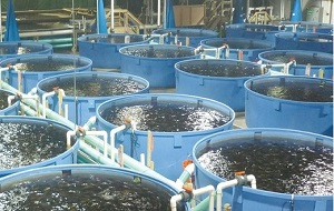 Fish Farming Production in the UAE